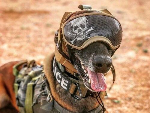 AR-szemüveg kutyáknak